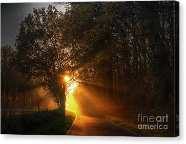 Rays Of Gold Canvas Print