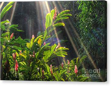 Rays Of Sunlight Canvas Print