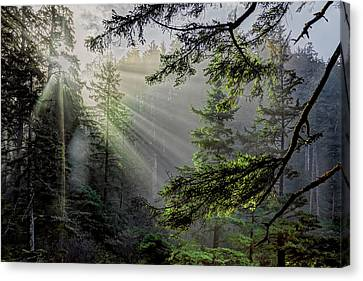 Rays Through A Northern Pacific Rain Forest Canvas Print by Kay Brewer