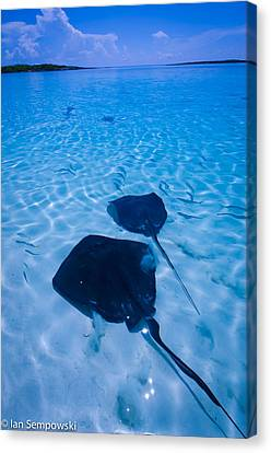 Rays Under Feet Canvas Print