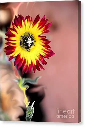 Reach Canvas Print by Cheryl Gidding