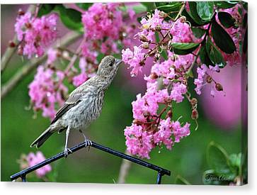 Canvas Print featuring the photograph Reach For It by Trina Ansel