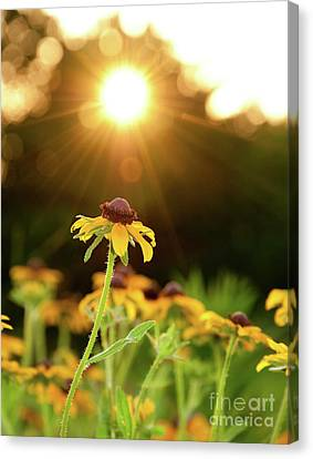 Reaching For Evening Sun Canvas Print