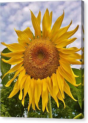 Reaching For The Sky Canvas Print by Bruce Bley