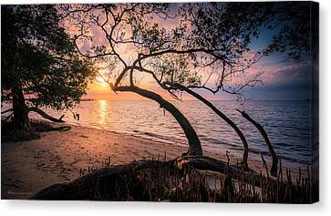 Mangrove Forest Canvas Print - Reaching For The Sun by Marvin Spates