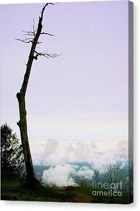 Reaching In The Shenandoah Canvas Print