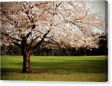 Reaching Out - Ocean County Park Canvas Print by Angie Tirado