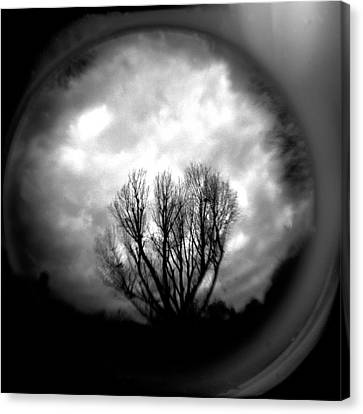 Holga Camera Canvas Print - Reaching by Paul Anderson