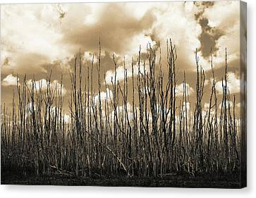 Canvas Print featuring the photograph Reaching To The Sky by Gary Dean Mercer Clark