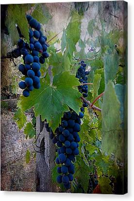 Ready For Harvest Canvas Print by Dorothy Berry-Lound