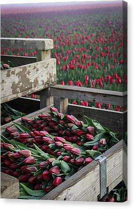 Ready For Market Canvas Print by Eric Ewing