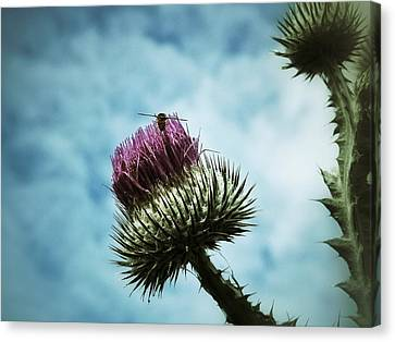 Canvas Print featuring the photograph Ready For Take-off by Karen Stahlros