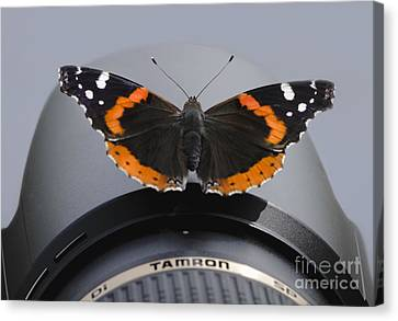 Ready For Takeoff Canvas Print by Andrea Silies