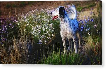 Ready To Chase, English Setter Canvas Print