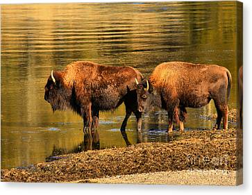 Canvas Print featuring the photograph Ready To Cross The Yellowstone by Adam Jewell