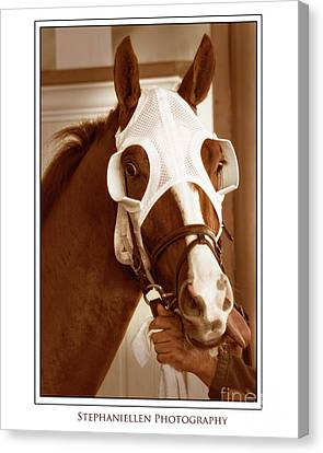 Ready To Race Canvas Print by Stephanie Hayes