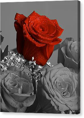 Really Red Rose Canvas Print by M K  Miller
