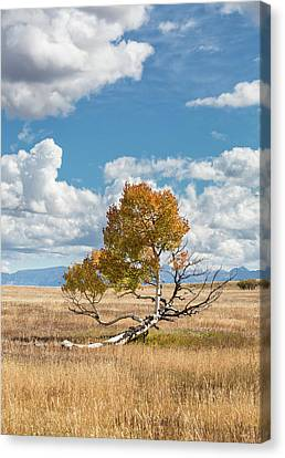 Reclining In The Sun Canvas Print