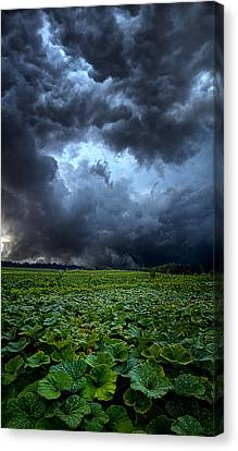 Reclusive Canvas Print by Phil Koch