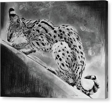 Recoil - Serval Canvas Print