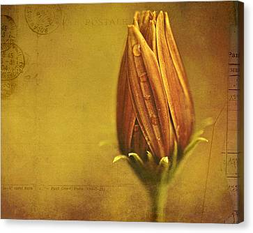 Raindrop Canvas Print - Recollection by Bonnie Bruno