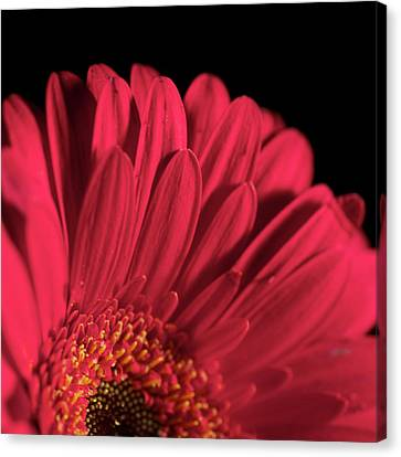 Canvas Print featuring the photograph Red 4 by Sheryl Thomas