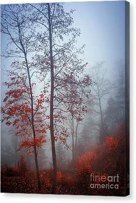 Canvas Print featuring the photograph Red And Blue by Elena Elisseeva