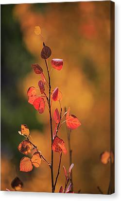 Canvas Print featuring the photograph Red And Gold by David Chandler