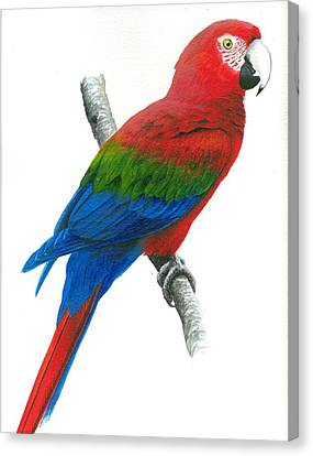 Red And Green Macaw Canvas Print by Christopher Cox