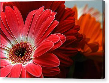 Clayton Canvas Print - Red And Orange Florals by Clayton Bruster