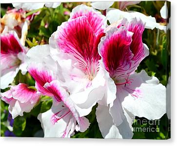 Red And White Petunias In The Garden Canvas Print by Mary Deal