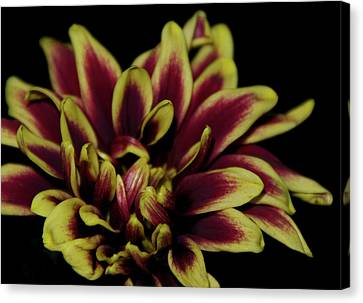Canvas Print featuring the photograph Red And Yellow 2 by Sheryl Thomas