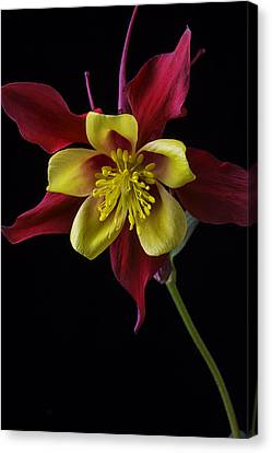 Columbine Canvas Print - Red And Yellow Columbine Flower by Garry Gay