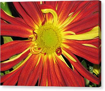 Canvas Print featuring the photograph Red And Yellow Flower by Barbara Yearty