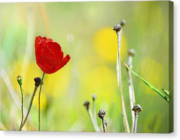Red And Yellow Canvas Print by Guido Montanes Castillo