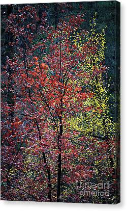 Red And Yellow Leaves Abstract Vertical Number 1 Canvas Print by Heather Kirk