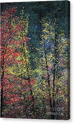 Red And Yellow Leaves Abstract Vertical Number 2 Canvas Print by Heather Kirk