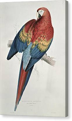 Red And Yellow Macaw  Canvas Print by Edward Lear