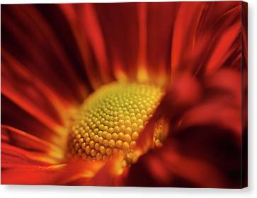 Canvas Print featuring the photograph Red And Yellow by Sheryl Thomas