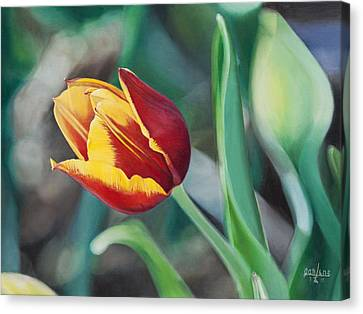 Red And Yellow Tulip Canvas Print by Joshua Martin