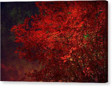 Red Autumn Tree Canvas Print by Susanne Van Hulst