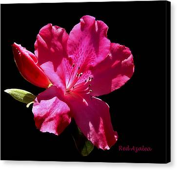 Red Azalea Canvas Print by Cecil Fuselier