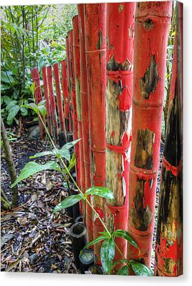 Red Bamboo Canvas Print by Dolly Sanchez