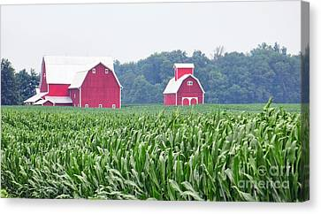 Red Barn And Cornfield  8707 Canvas Print by Jack Schultz