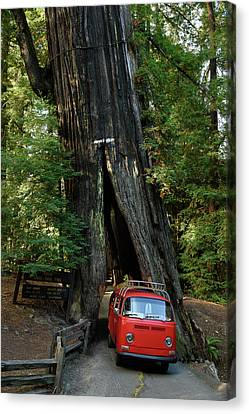 Red Bay Window Bus Drives Through A Tree Canvas Print