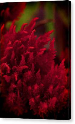 Red Beauty Canvas Print by Cherie Duran