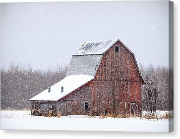 Red Beauty In Snow Canvas Print