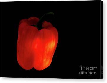 Glow-in-the-dark Red Bell Pepper Canvas Print by Masako Metz