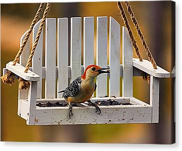 Red Bellied On Swing - 5 Canvas Print by Bill Tiepelman