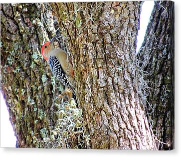 Canvas Print featuring the photograph Red-bellied Woodpecker By Bill Holkham by Bill Holkham
